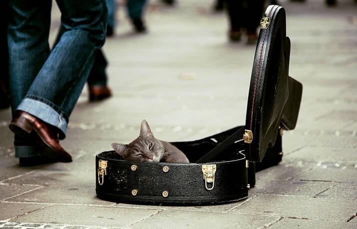 可愛いギターケース